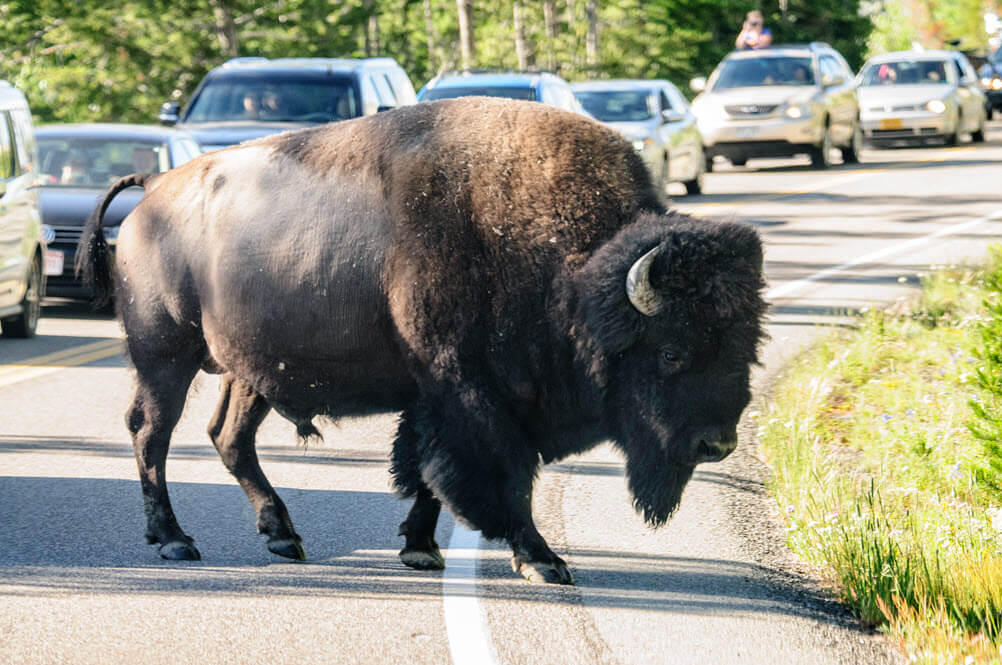Evaluating Proposed Infrastructure Changes at Yellowstone National Park